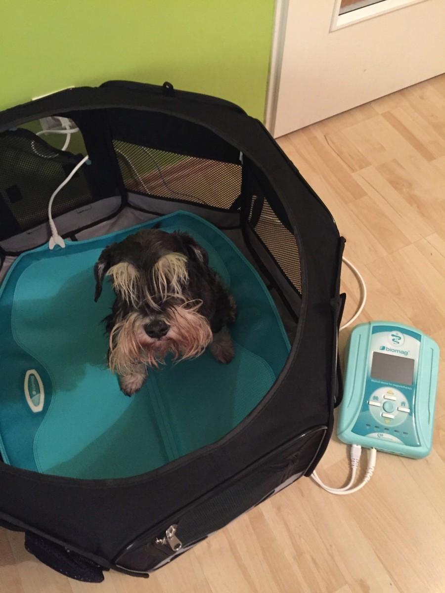 Nově veterinární magnetoterapie